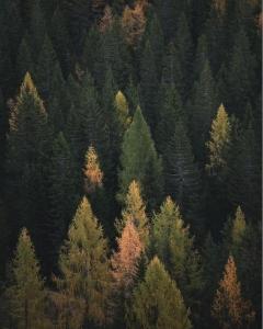 Fák és erdők nélkül NINCSEN fenntartható jövő!